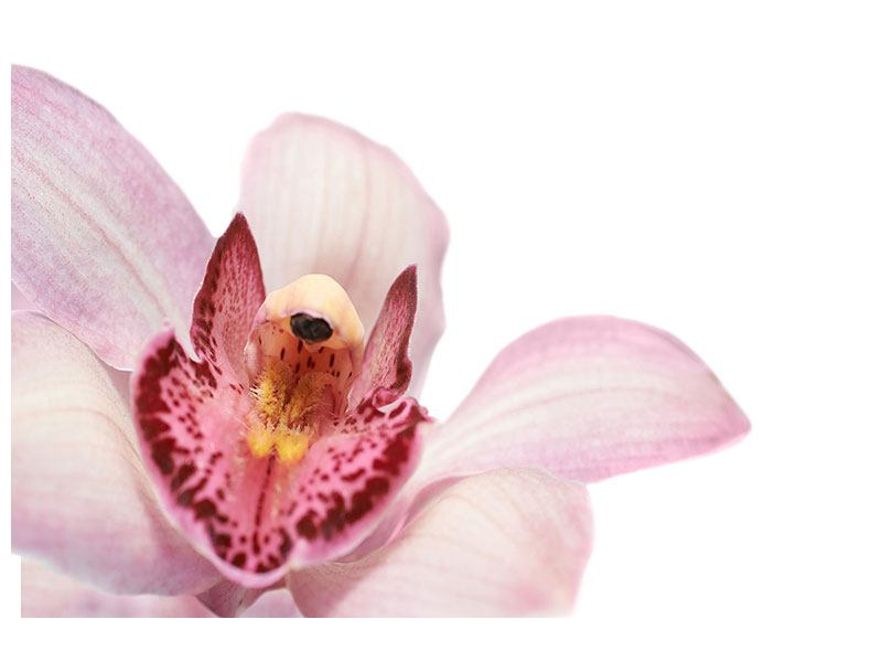 Metallic-Bild Orchideenblüte XXL