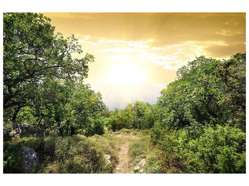 Metallic-Bild Am Ende des Waldes