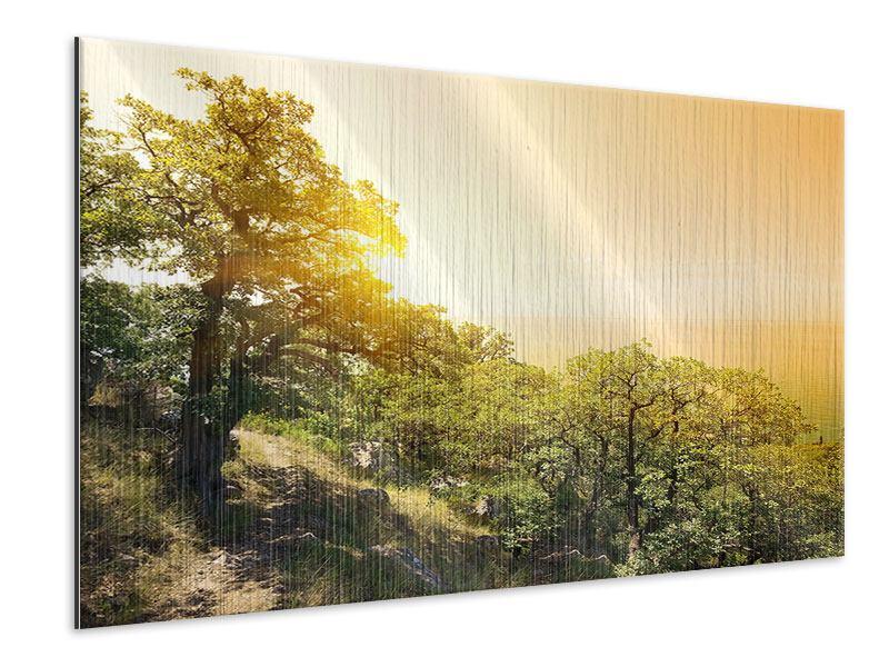 Metallic-Bild Sonnenuntergang in der Natur