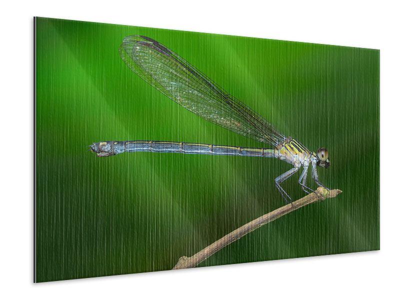 Metallic-Bild Die Libelle