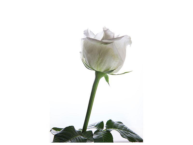 Metallic-Bild Im Namen der Rose