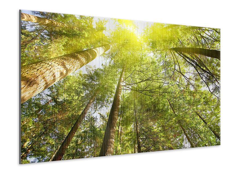 Metallic-Bild Baumkronen in der Sonne