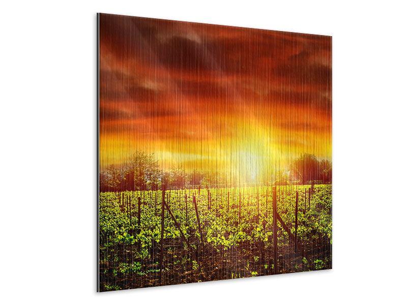 Metallic-Bild Der Weinberg bei Sonnenuntergang