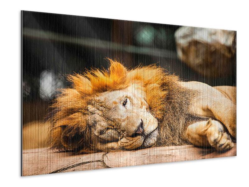 Metallic-Bild Entspannter Löwe