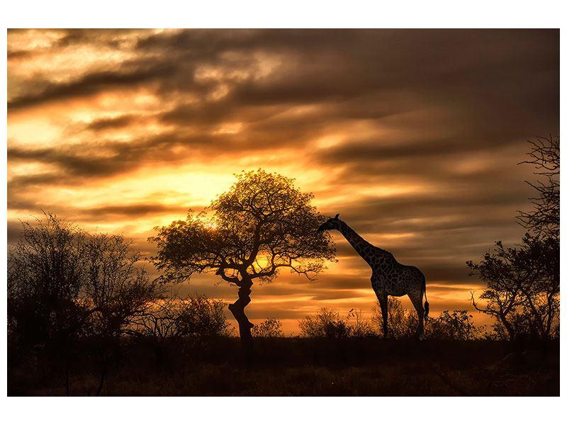 Metallic-Bild African Dreams