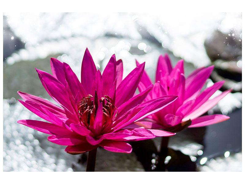 Metallic-Bild Seerosenduo in Pink