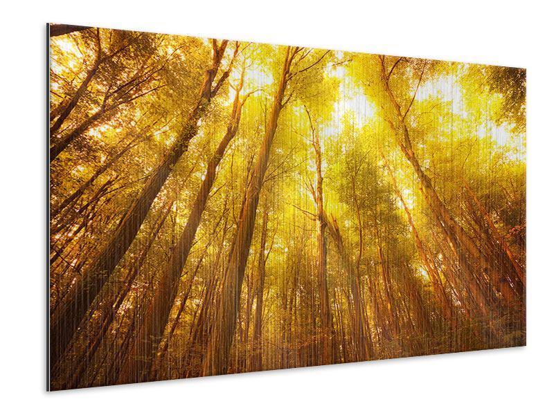 Metallic-Bild Herbstwald