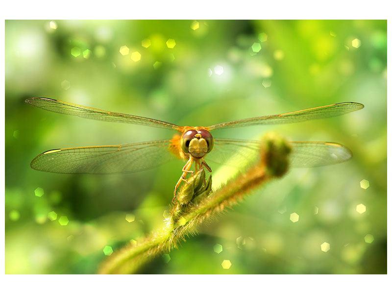 Metallic-Bild XXL-Libelle