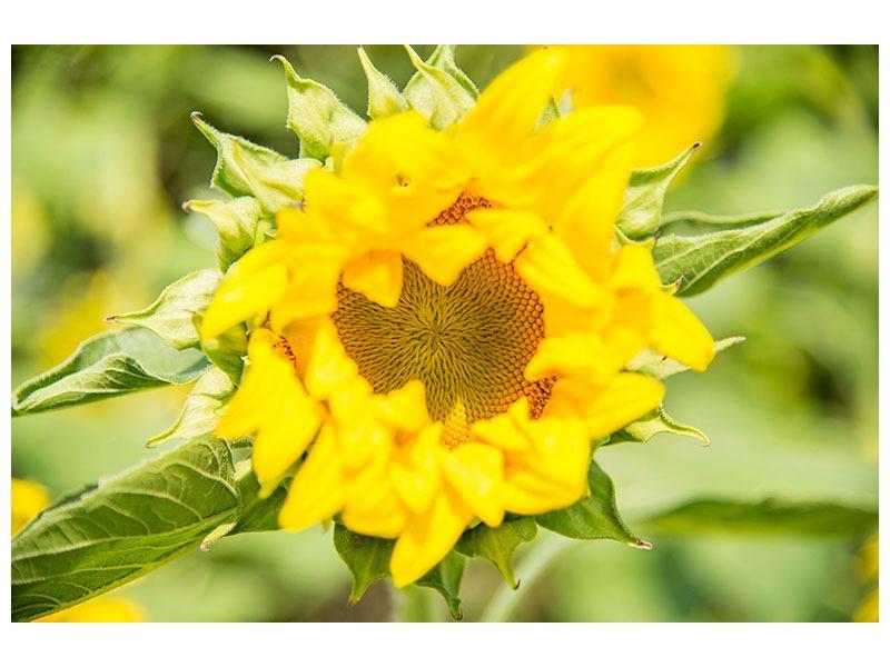 Metallic-Bild Wilde Sonnenblume