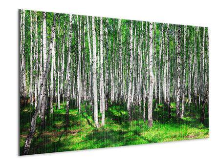 Metallic-Bild Sommerlicher Birkenwald