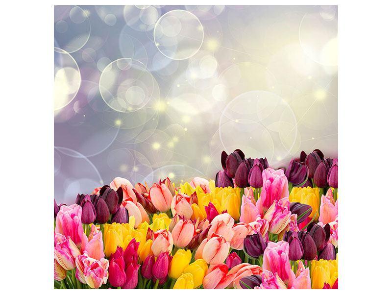 Metallic-Bild Buntes Tulpenbeet im Lichtspiel