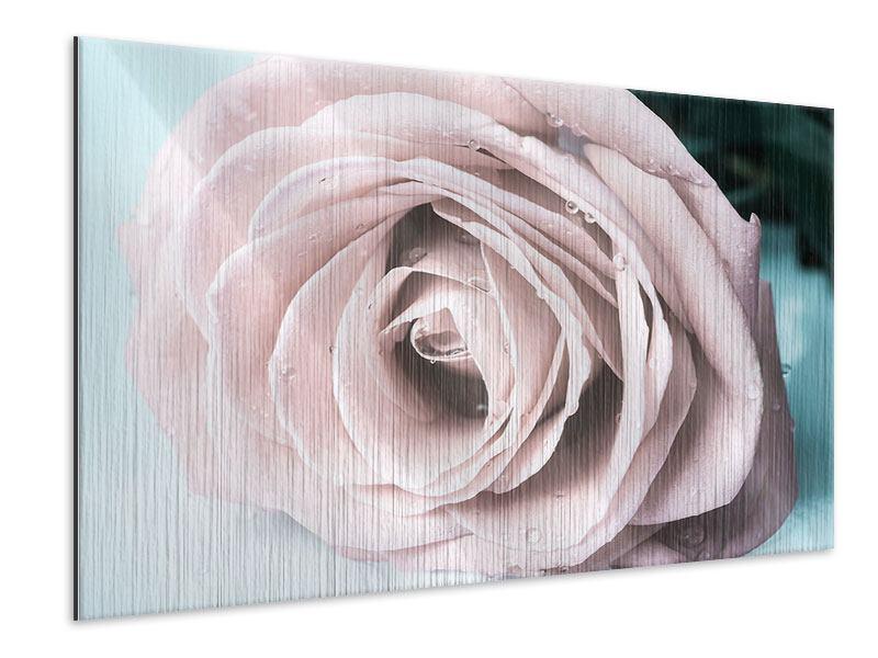 Metallic-Bild Pastellrose