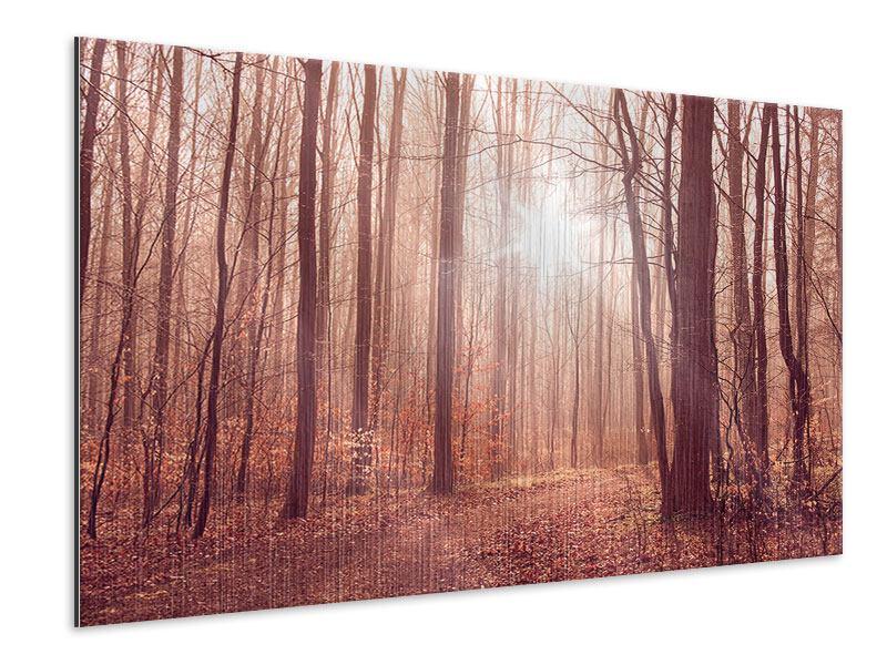 Metallic-Bild Sonnenuntergang im Herbstwald