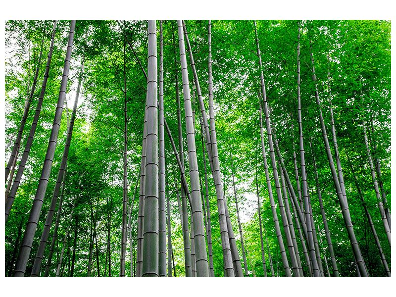 Metallic-Bild Bambuswald