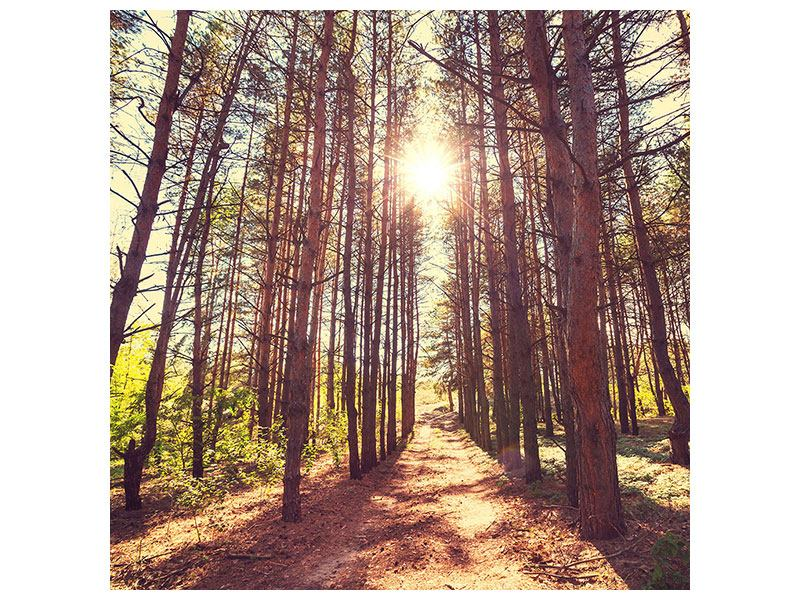 Metallic-Bild Licht am Ende des Waldweges