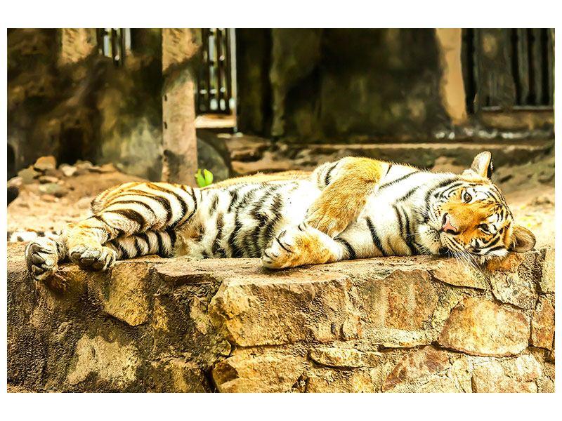 Metallic-Bild Der Sibirische Tiger