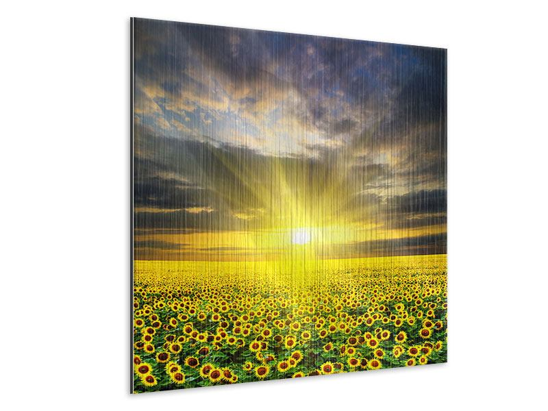 Metallic-Bild Abenddämmerung bei den Sonnenblumen
