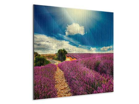 Metallic-Bild Das Lavendeltal