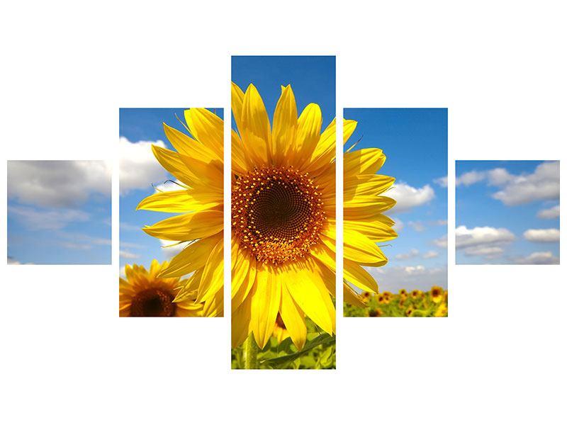 Metallic-Bild 5-teilig Das Feld der Sonnenblumen