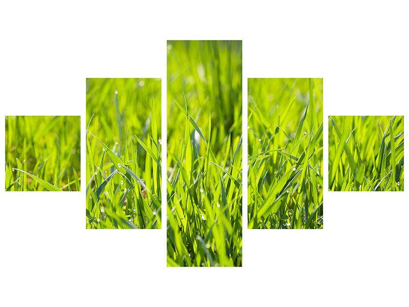 Metallic-Bild 5-teilig Gras im Morgentau