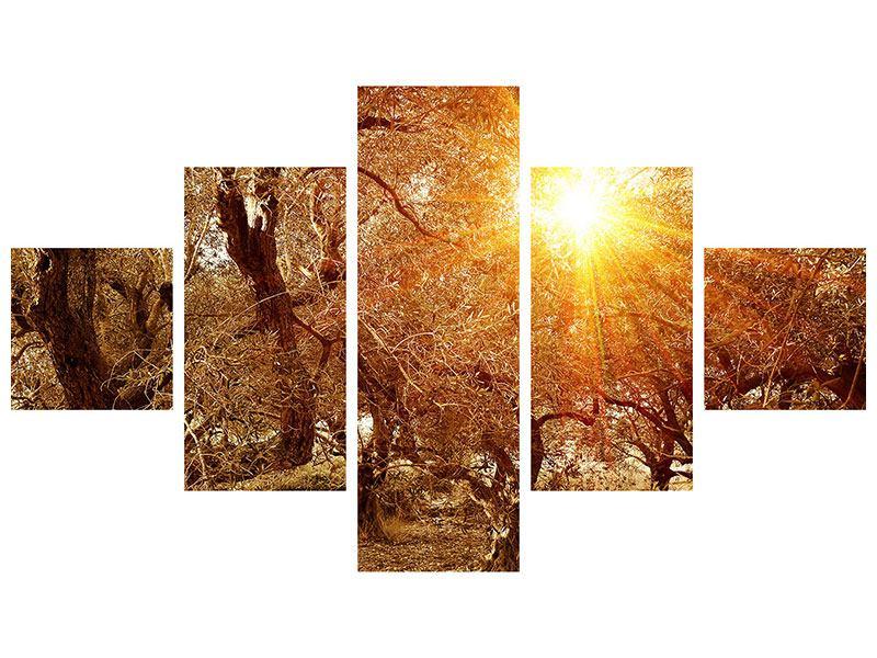 Metallic-Bild 5-teilig Olivenbäume im Herbstlicht