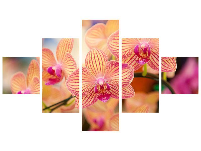 Metallic-Bild 5-teilig Exotische Orchideen