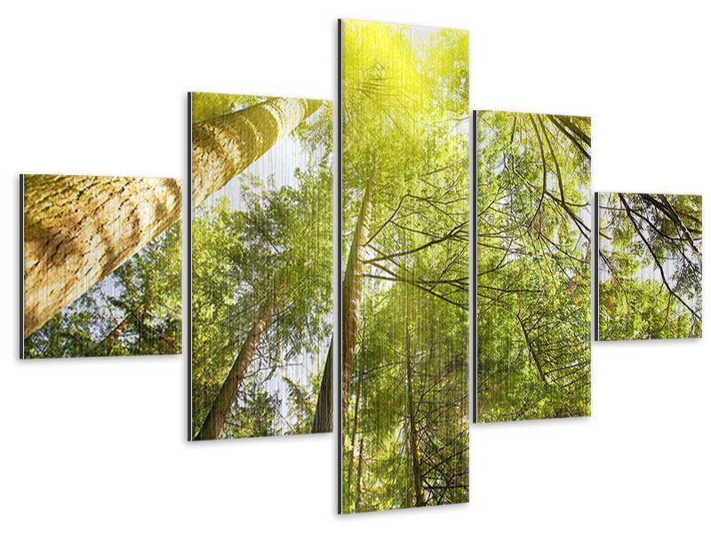 Metallic-Bild 5-teilig Baumkronen in der Sonne
