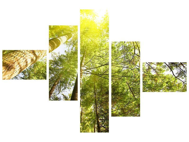 Metallic-Bild 5-teilig modern Baumkronen in der Sonne