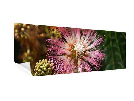Poster Panorama Die Regenbaumblüte