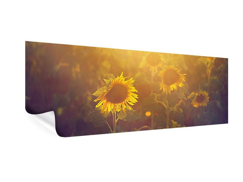 Poster Panorama Sonnenblumen im goldenen Licht