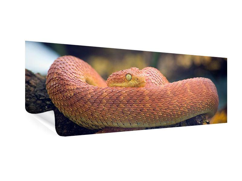 Poster Panorama Schlange