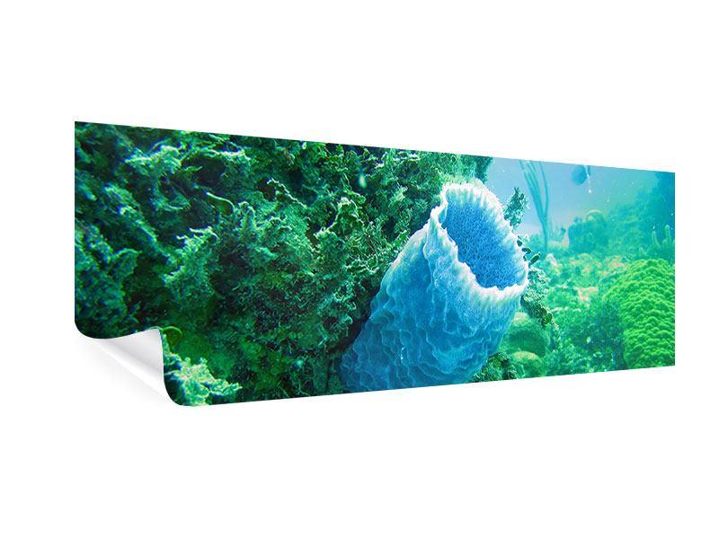 Poster Panorama Korallen