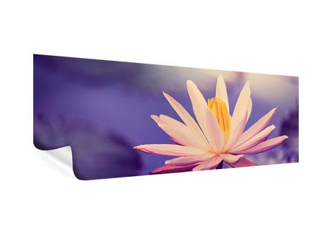 Poster Panorama Lotus bei Sonnenuntergang