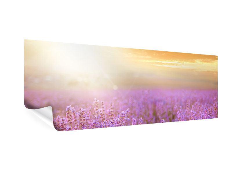 Poster Panorama Sonnenuntergang beim Lavendelfeld