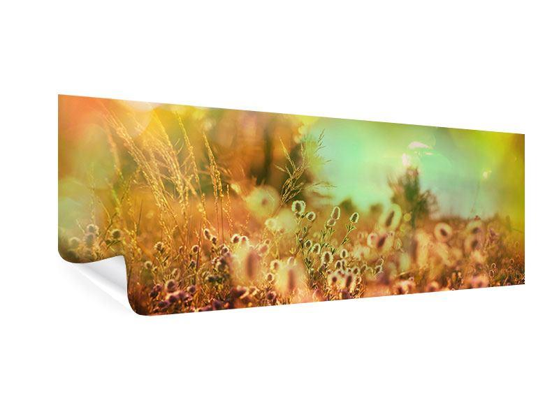 Poster Panorama Blumenwiese in der Abenddämmerung