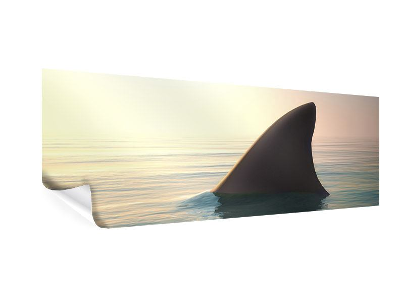 Poster Panorama Haifischflosse