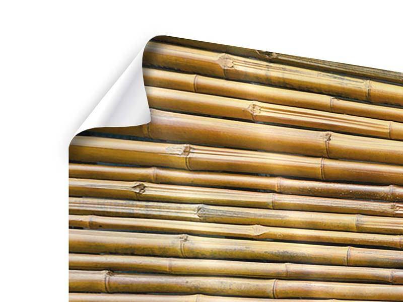 Poster Panorama Bambus