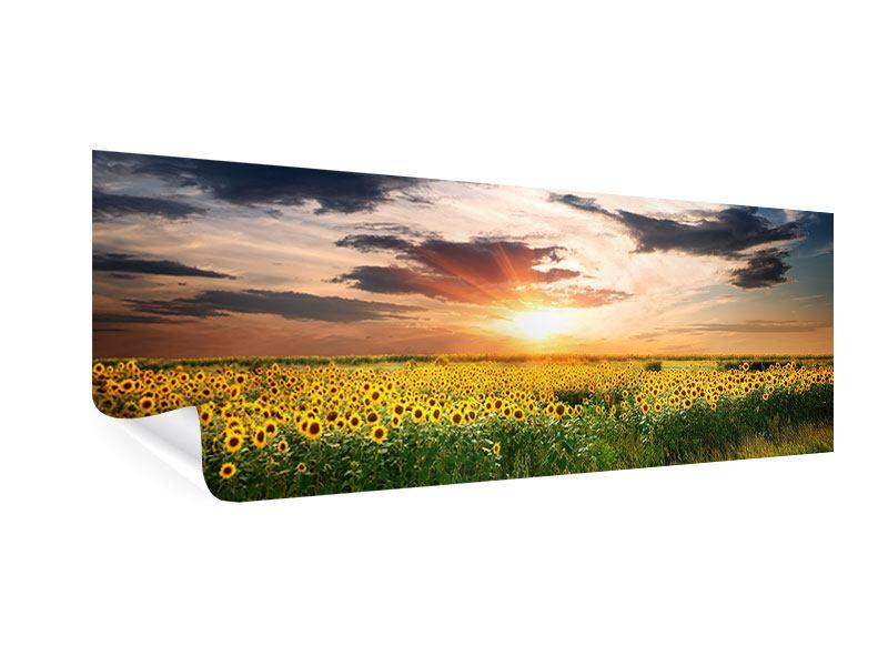 Poster Panorama Ein Feld von Sonnenblumen