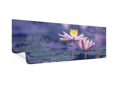Poster Panorama Lotus Duo im Sonnenaufgang