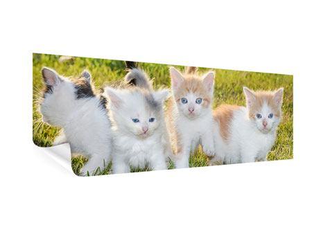 Poster Panorama Katzenbabys