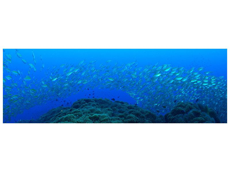 Poster Panorama Fischschwärme