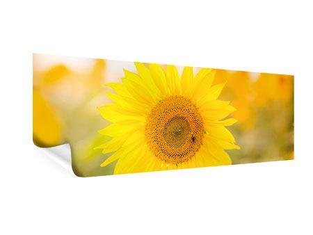 Poster Panorama Sunflower