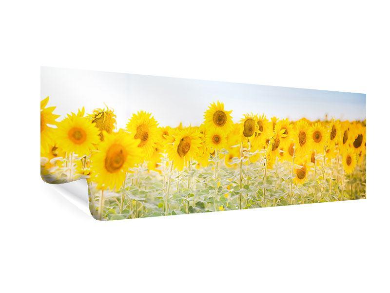 Poster Panorama Im Sonnenblumenfeld