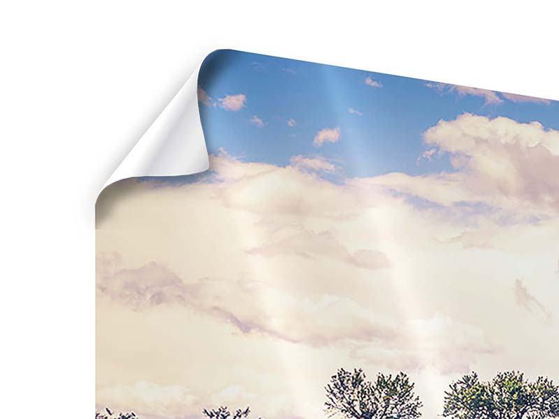 Poster Panorama Das Lavendelfeld