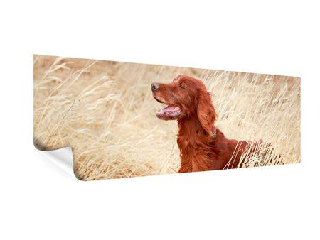 Poster Panorama Irish Red Setter