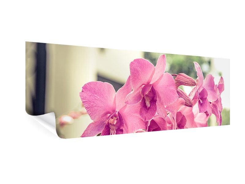 Poster Panorama Ein Fensterplatz für die Orchideen