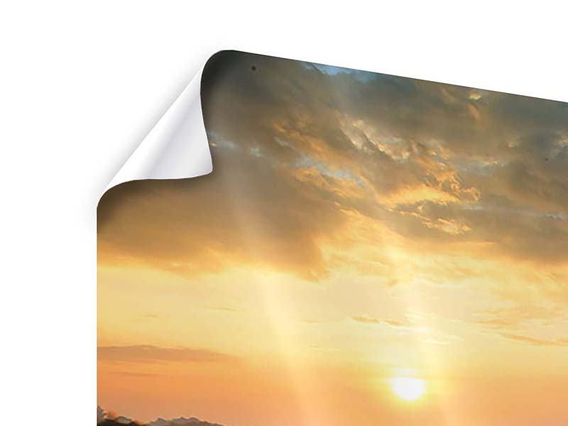 Poster Panorama Sonnenblumenfeld im Abendrot