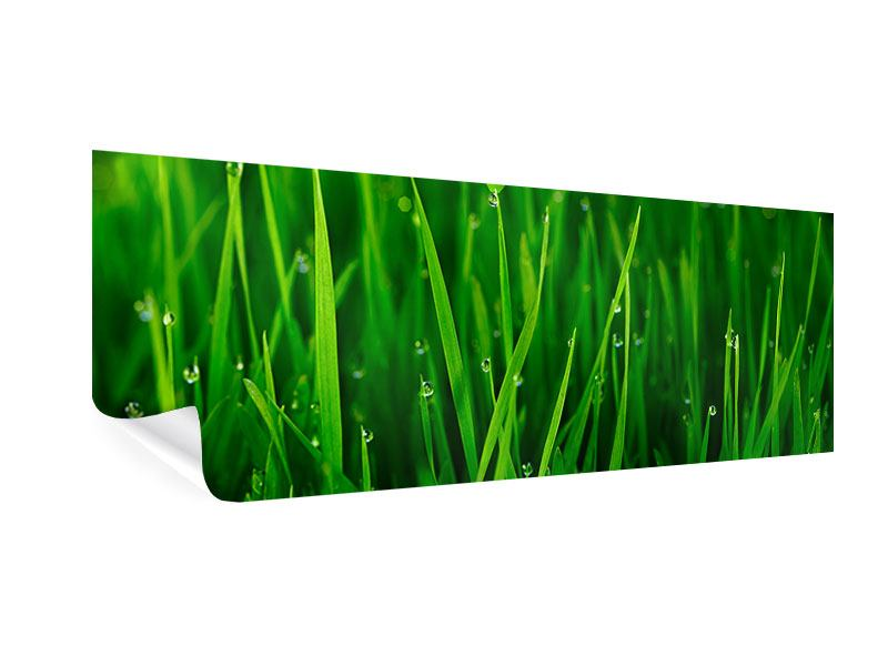 Poster Panorama Gras mit Morgentau