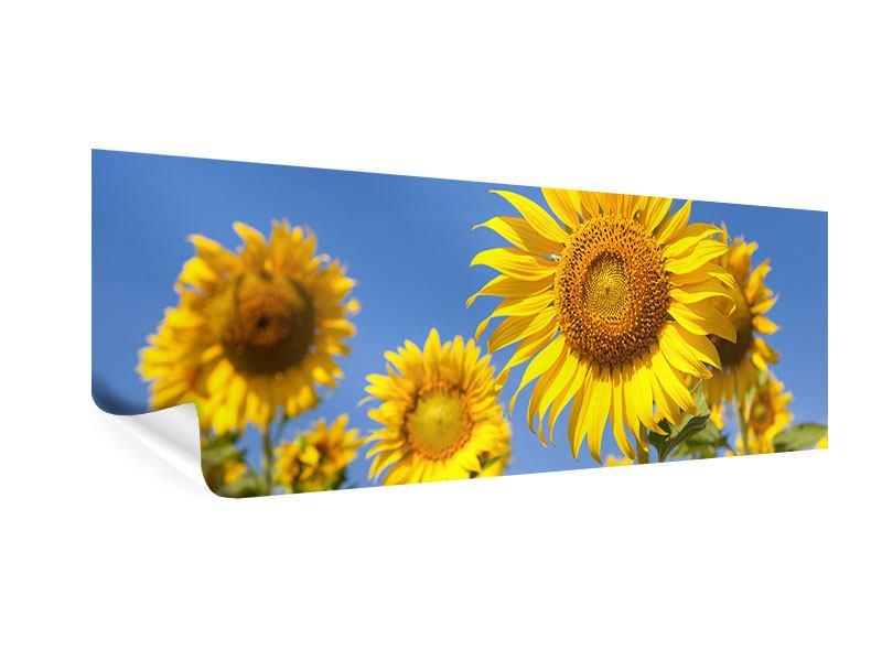 Poster Panorama Himmlische Sonnenblumen
