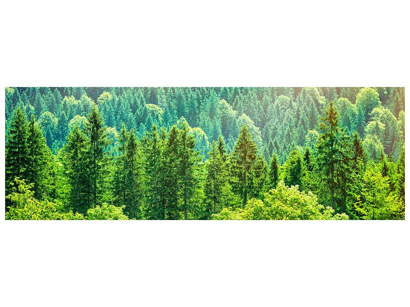 Poster Panorama Der Waldhügel